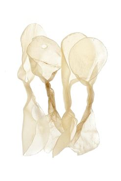 RAWHIDE BUTTERFLY BONE 4PC 32G 13CM